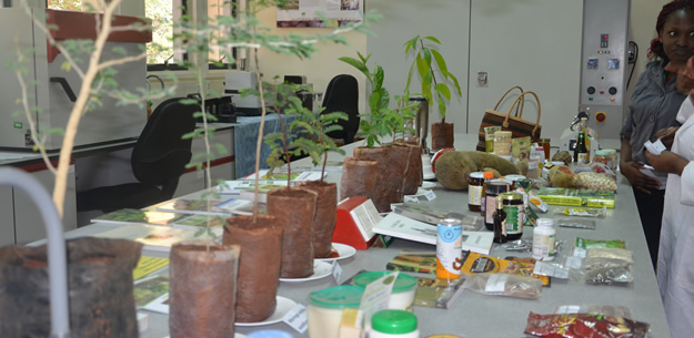 Trees and some of their products displayed at the Genetic Resources Unit Laboratory